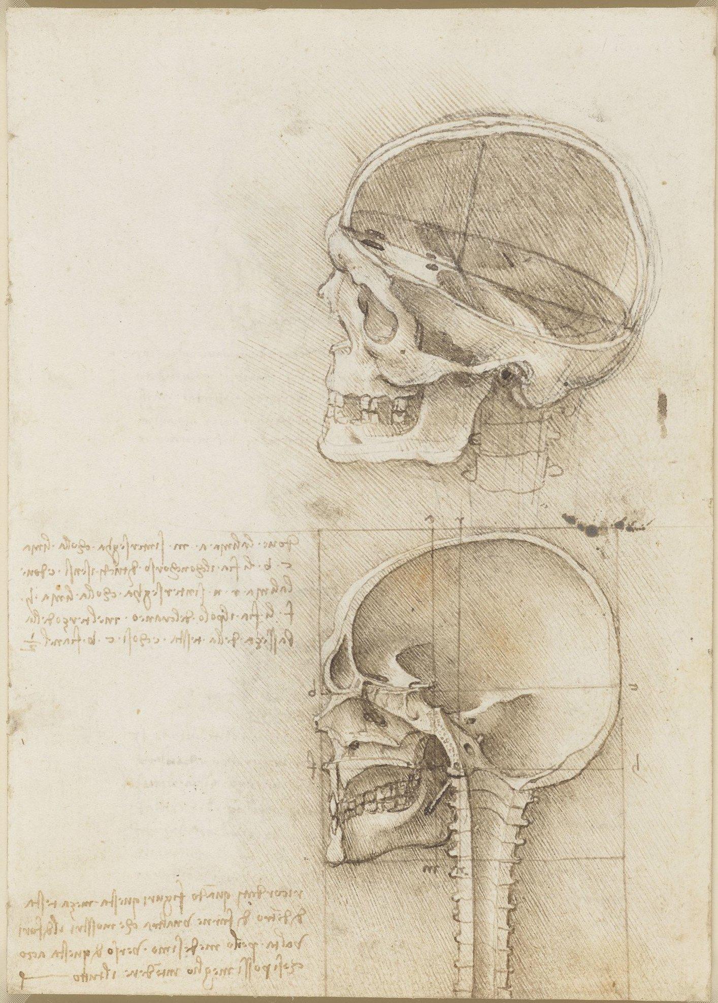 13 919057 skull sections.jpg